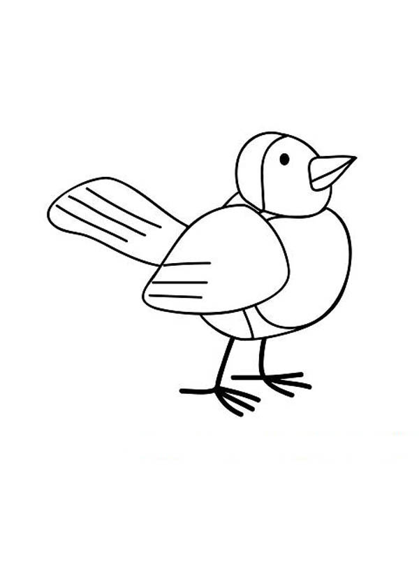 600x832 Robin Bird Drawing Coloring Page