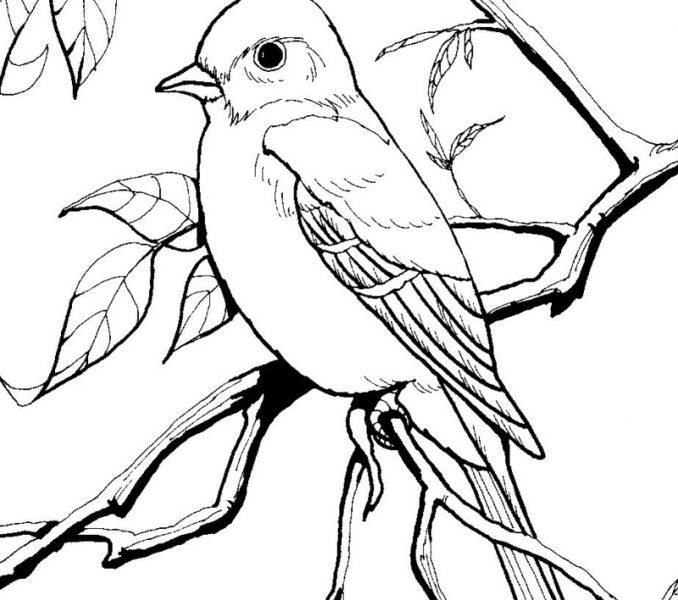 678x600 Coloring Book Birds Coloring Book Birds New Picture Bird Coloring