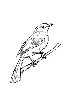 256x320 How To Draw A Bird