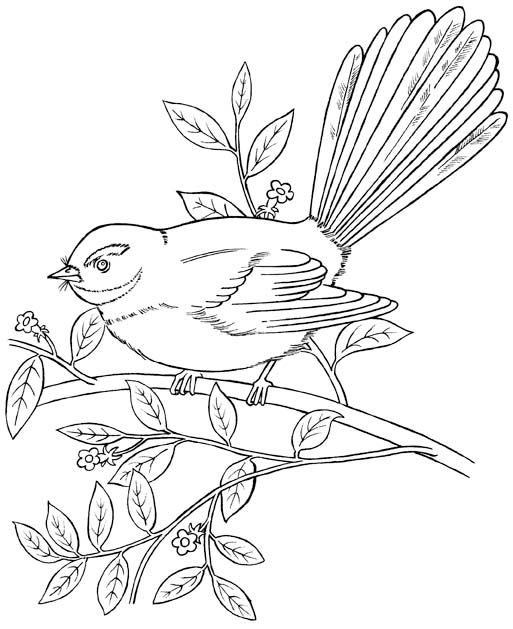 513x629 New Zealand Native Fantail Forest And Park Bird Coloring Picture