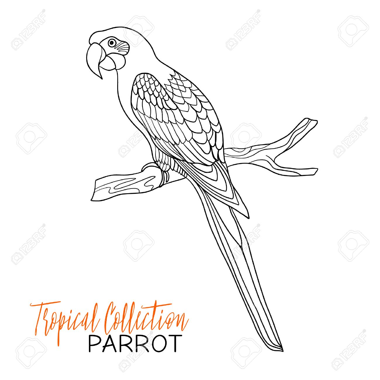 1300x1300 Parrot. Tropical Bird. Vector Illustration. Coloring Book