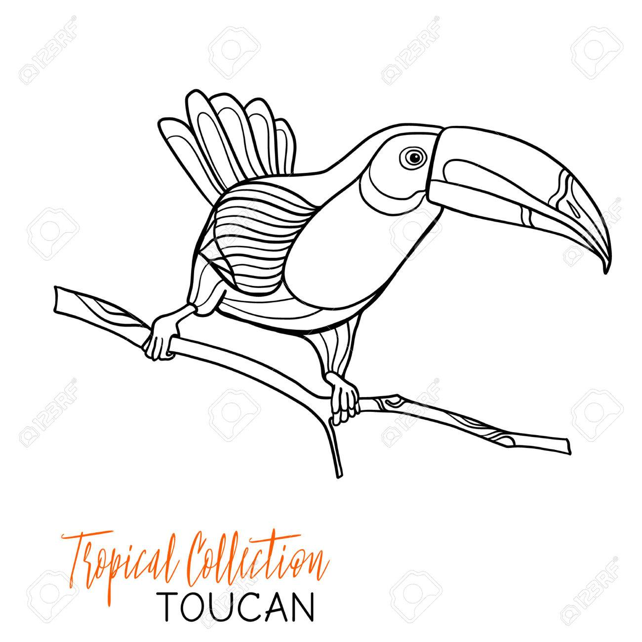 1300x1300 Toucan. Tropical Bird. Vector Illustration. Coloring Book