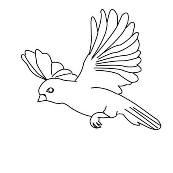 Bird Drawing Flying