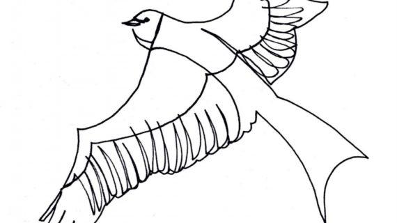 570x320 Drawings Of Bird Flying Bird Drawing Clipartsco