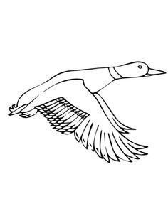 236x314 Drawn Duck Flight Drawing