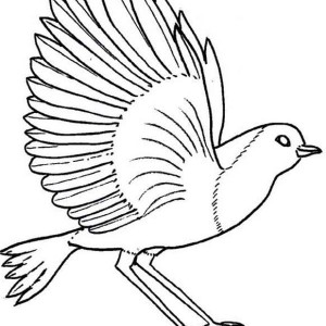 300x300 Flying Robin Bird Coloring Page Straight Flying Bird Coloring