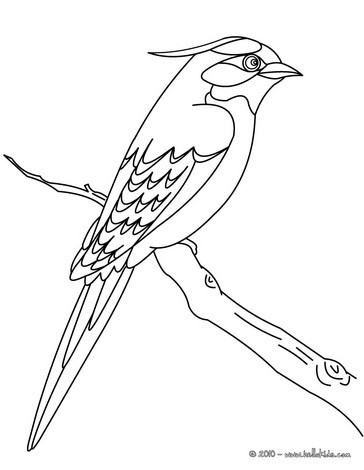 364x470 Flying Bird Coloring Pages