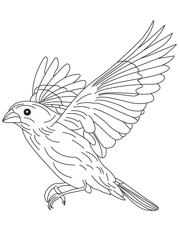 Bird drawing flying at free for personal for Flying crow coloring page