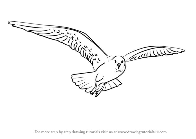 800x567 Learn How To Draw A Flying Gull (Birds) Step By Step Drawing