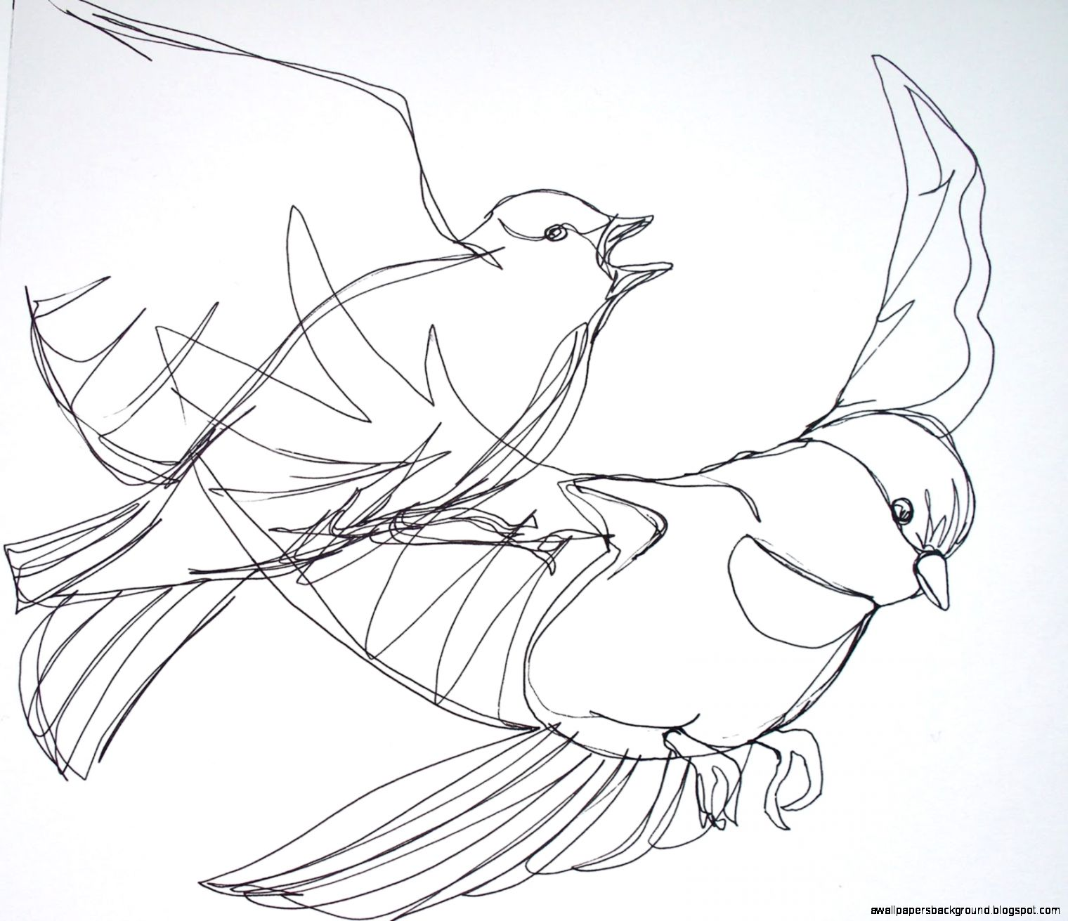1520x1311 Simple Flying Bird Drawing Wallpapers Background
