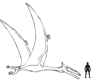 326x281 Student Guest Blog Post Pterosaur Wings And Flight Capabilities
