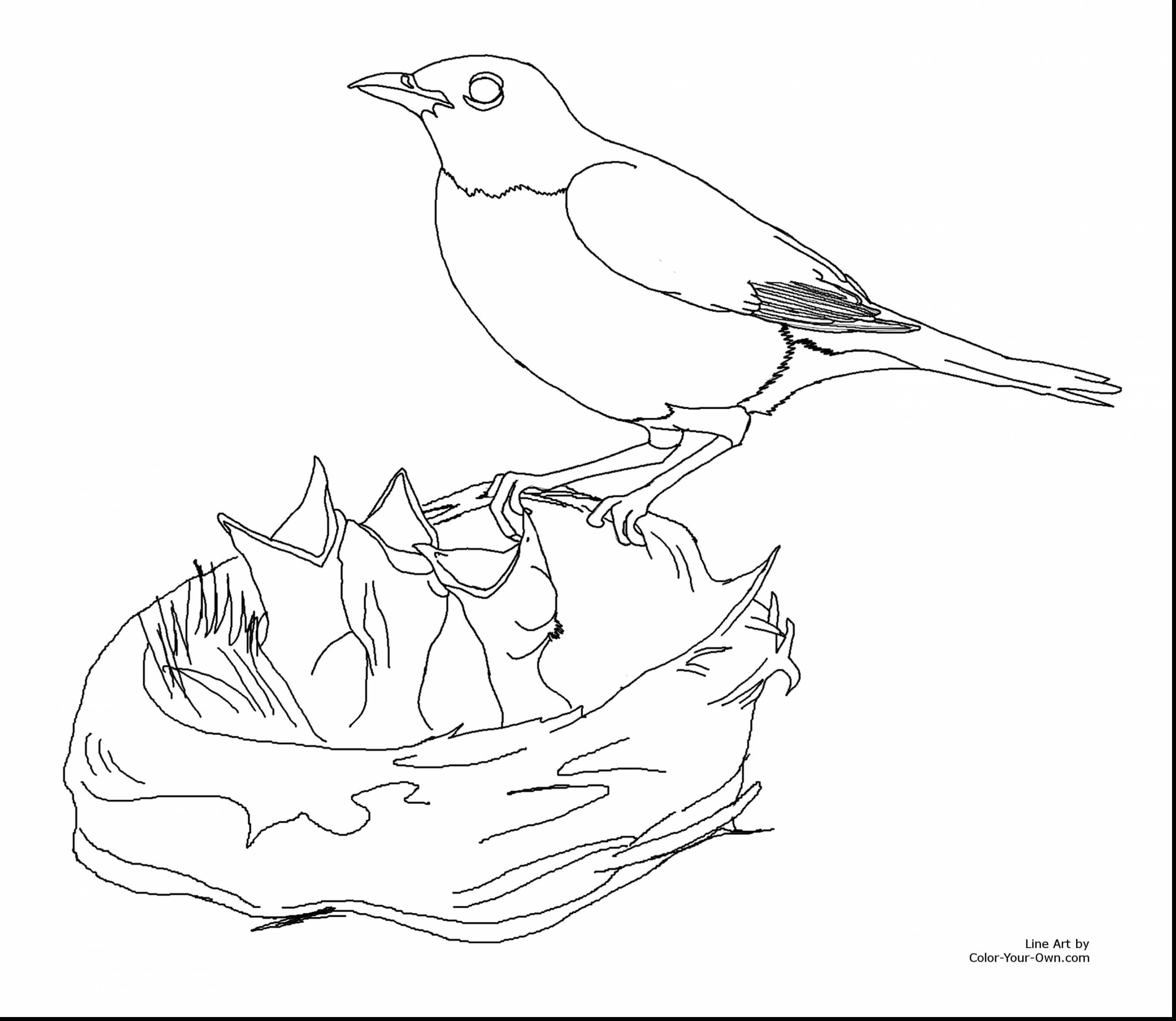 2970x2578 Beautiful How To Draw Bird Drawings Sketches With Coloring Pages