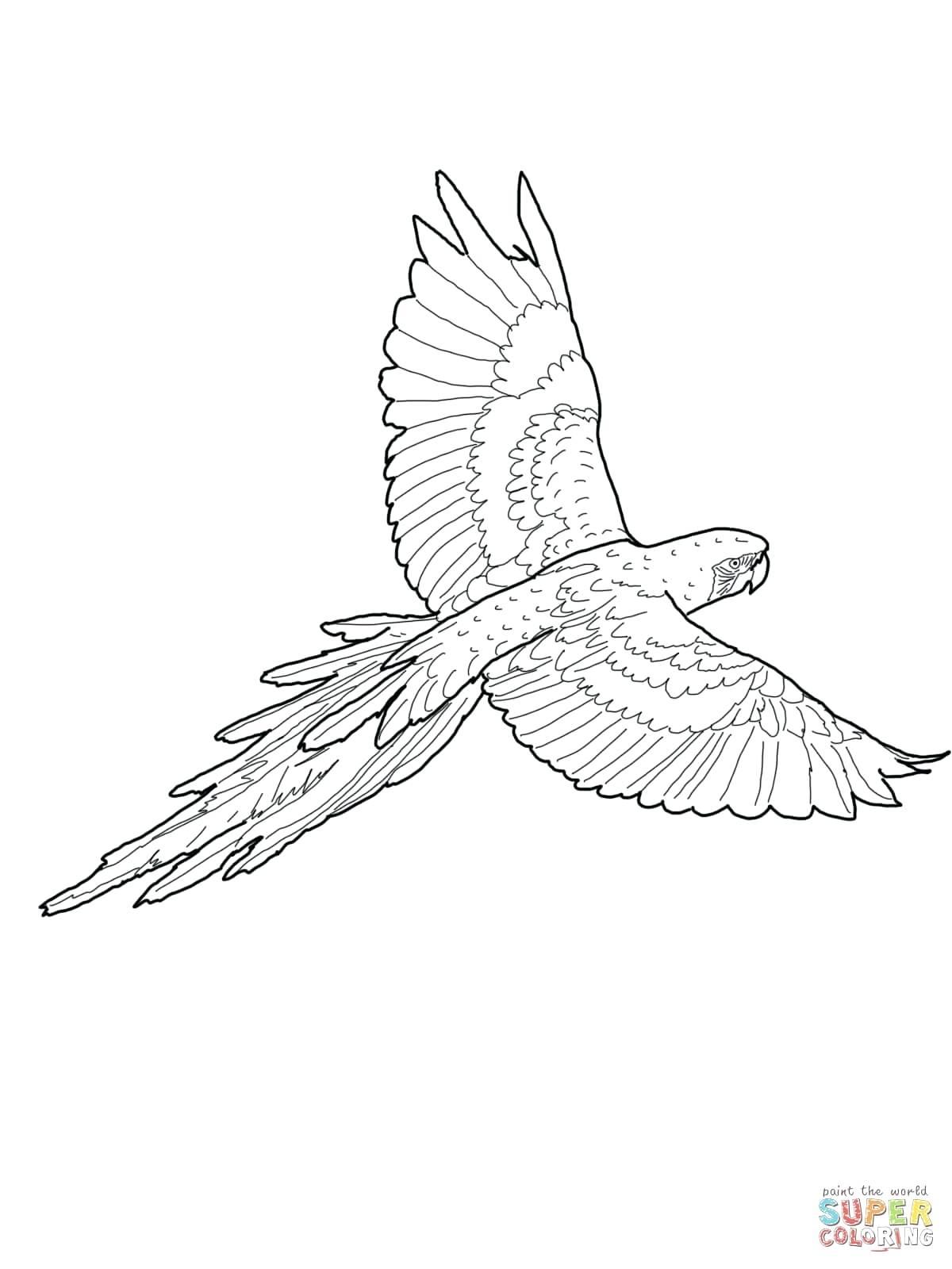 1200x1600 Printable Flying Bird Outline Printable Click The Crane Coloring