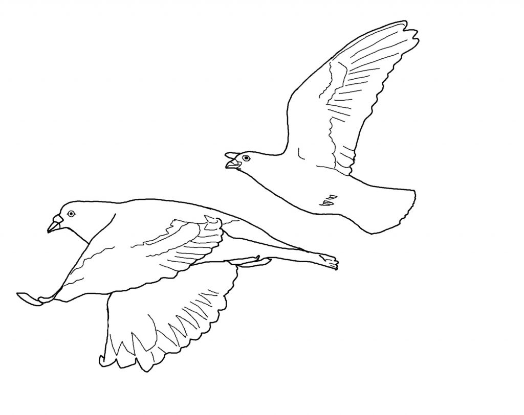1024x812 Birds Drawing For Kids
