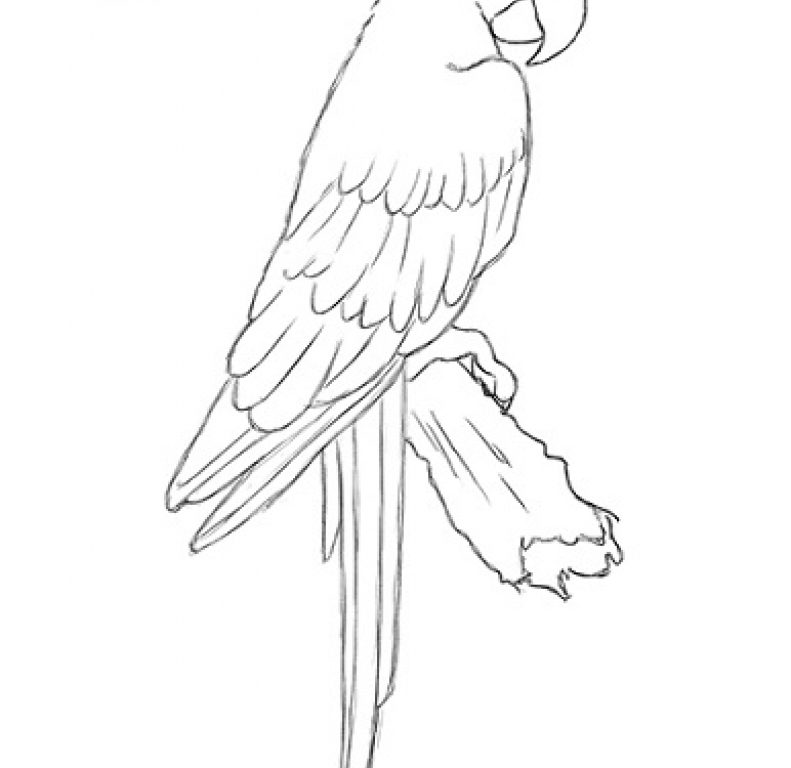791x768 Coloring Pages For Kids Birds Scarlet Macaw Flying Page Free