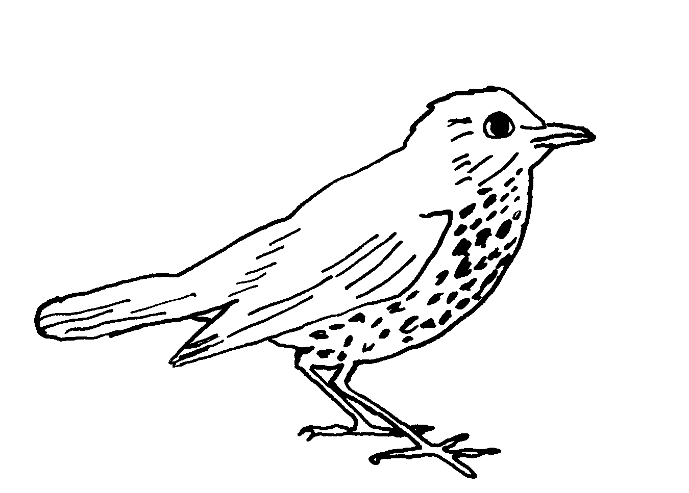 1350x967 Bird Line Drawings