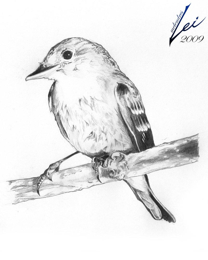 800x1000 Bird Pencil Sketch By Leimelendres