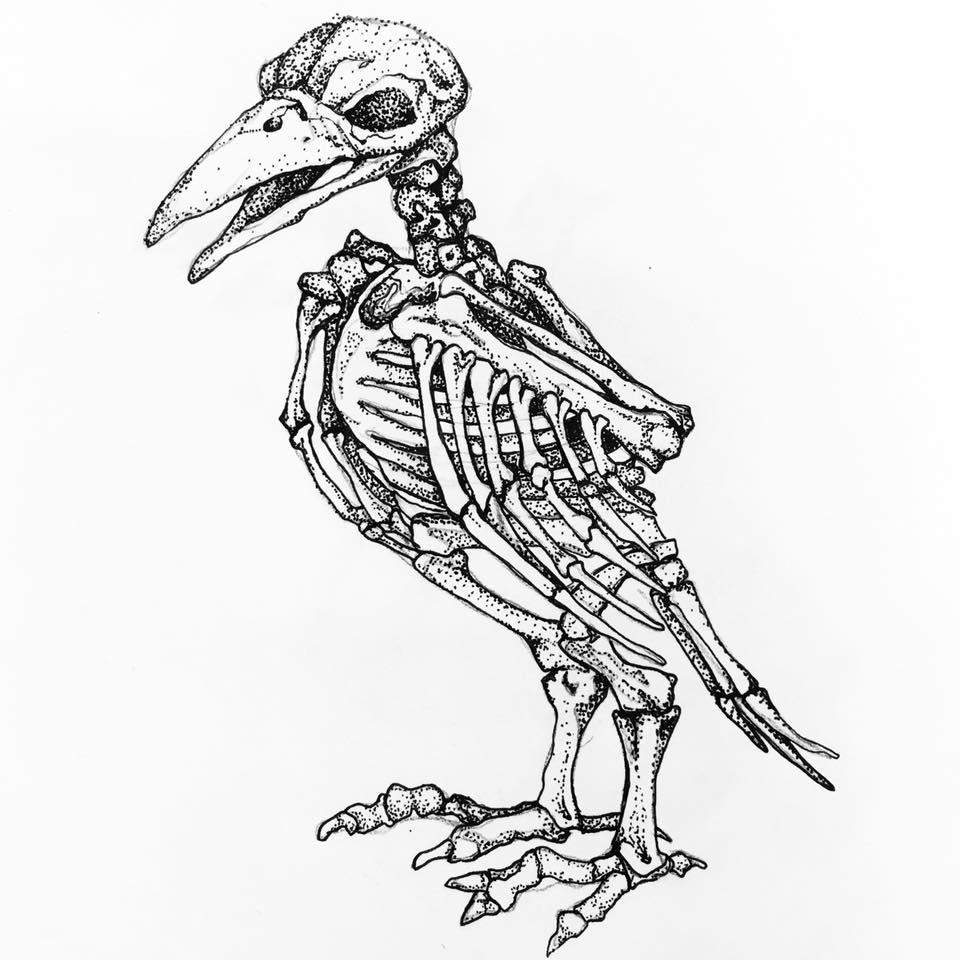 960x960 Bird Skeleton Drawing Anotherera Tictail