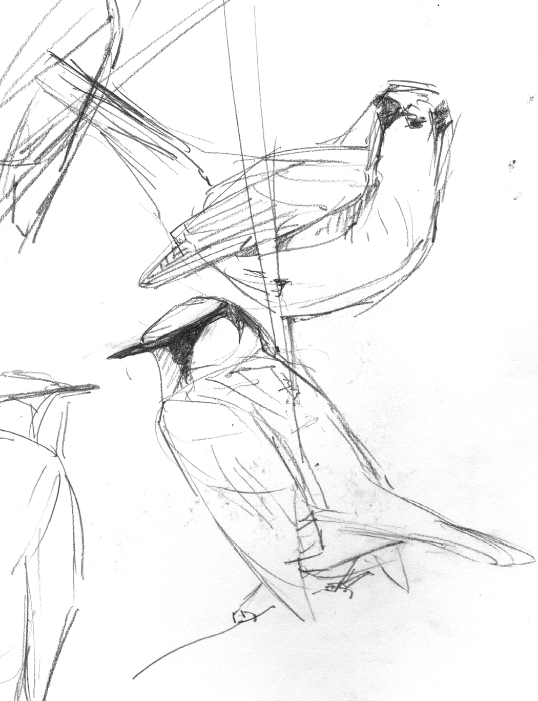 1050x1368 Birds And Boulders New Drawings Drawing The Motmot