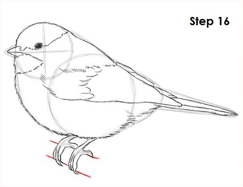 500x386 How To Draw A Chickadee