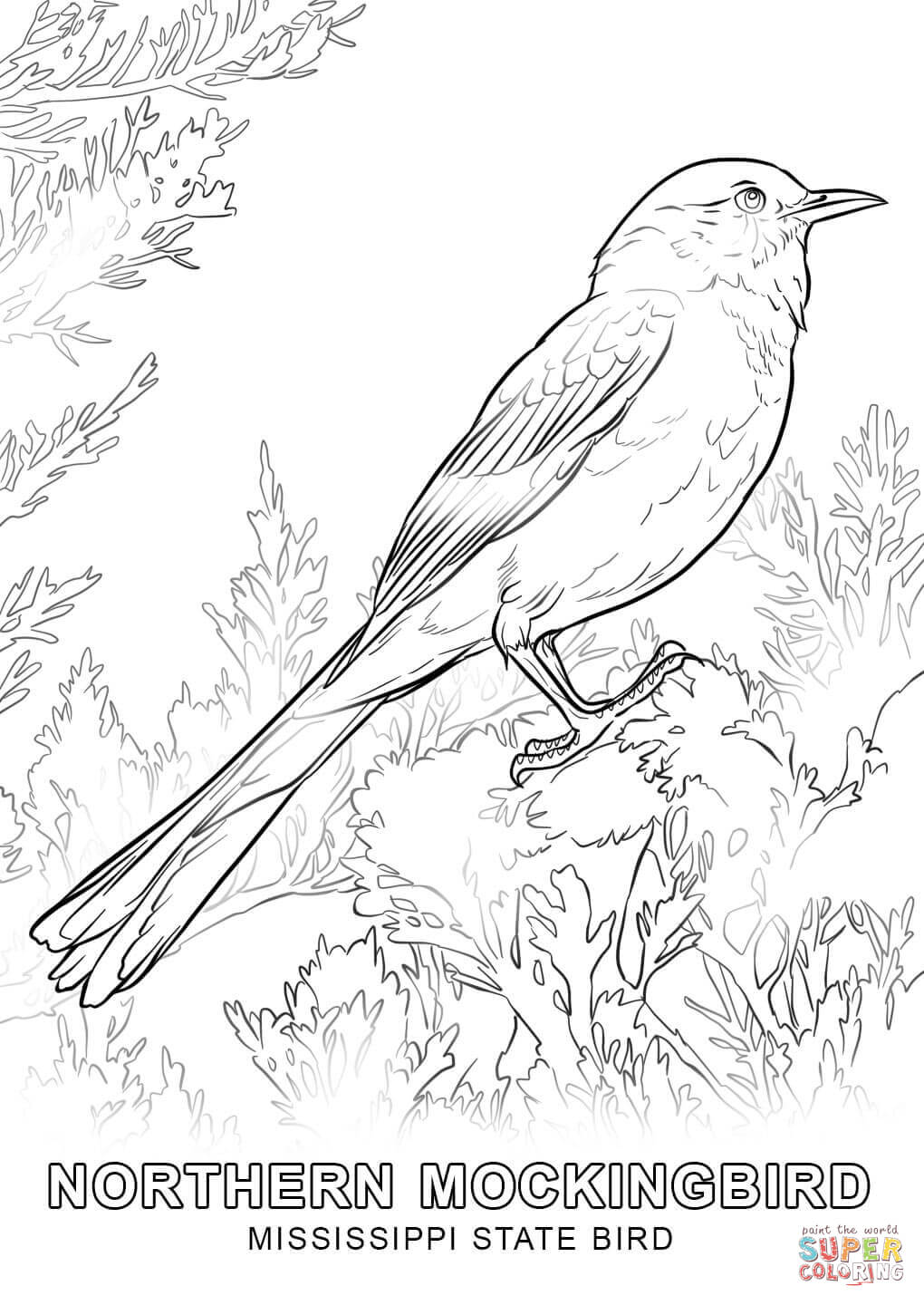 1020x1440 Mississippi State Bird Coloring Page Free Printable Coloring Pages