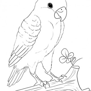 320x320 Tag Love Birds Drawing Images Wedding Love Birds Drawing