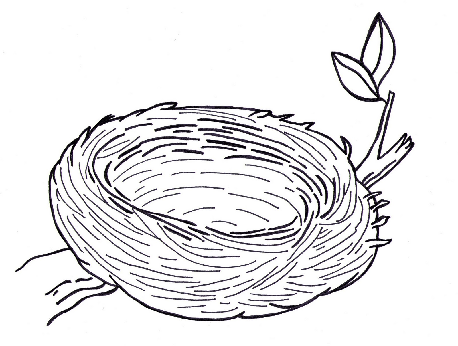 1600x1209 Nest Drawing Png Transparent Nest Drawing.png Images. Pluspng