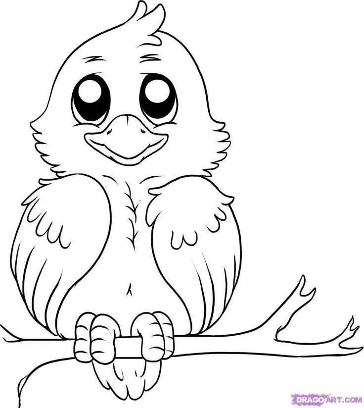 Bird Drawing Outline At Getdrawings Com Free For Personal Use Bird