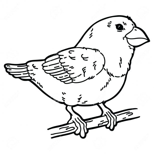 618x618 Coloring Pages Astonishing Outline Of A Bird. Bird Outline Tattoo