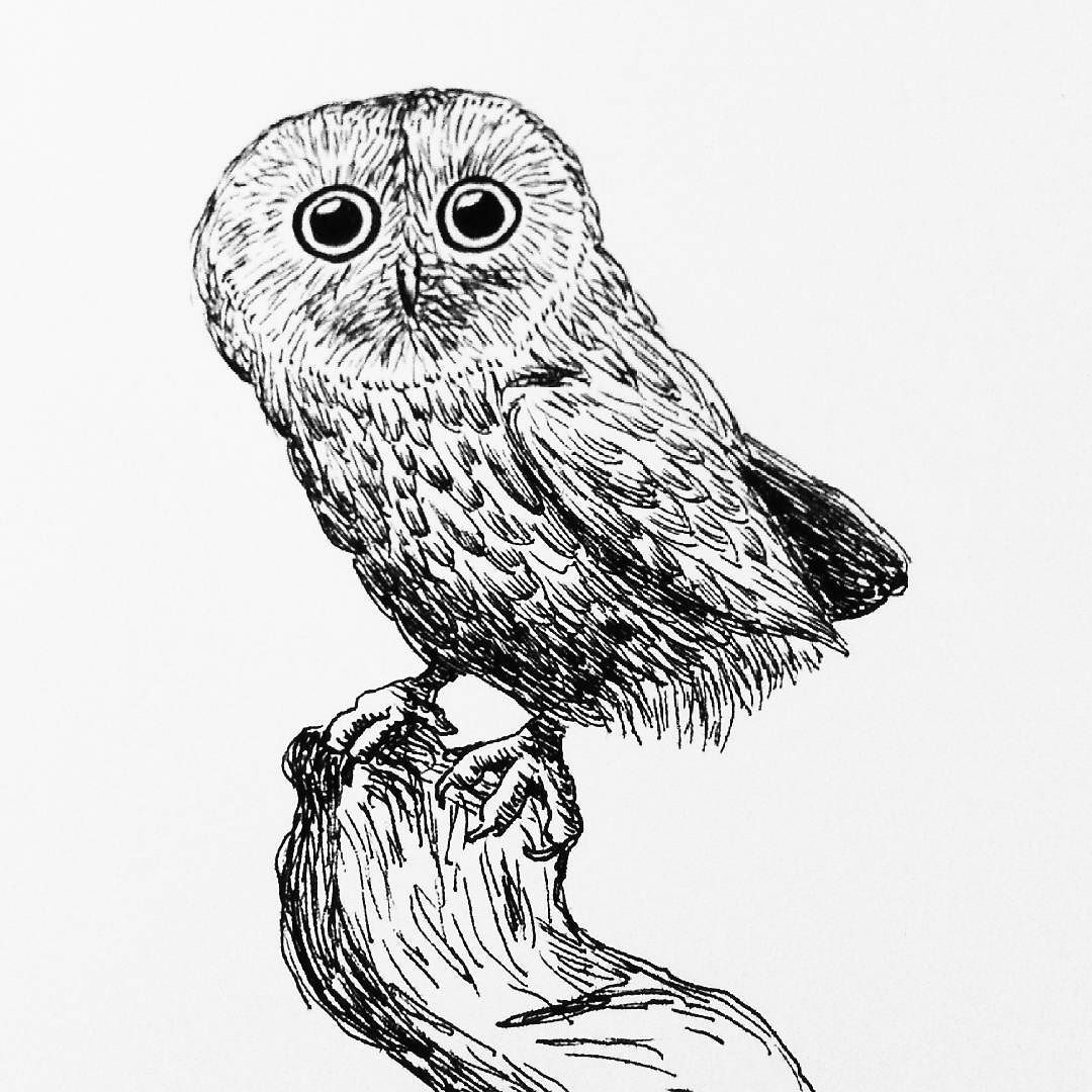1080x1080 A Little Owl For My Daily Drawing