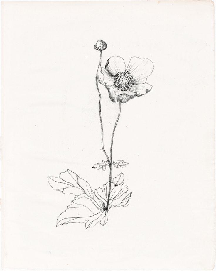 736x921 The Best Flower Drawing Tumblr Ideas On Flower Art