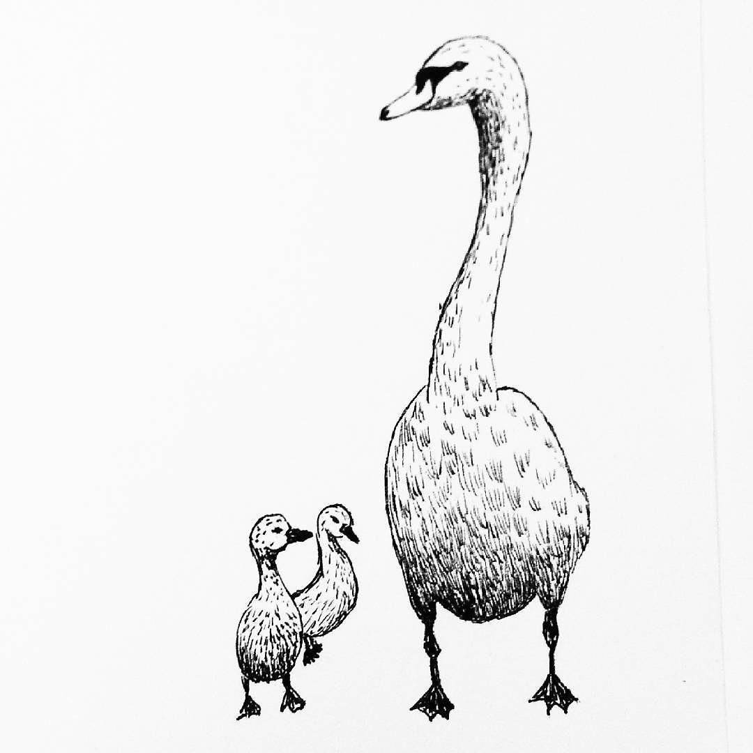 1080x1080 A Swan For My Daily Drawing 156
