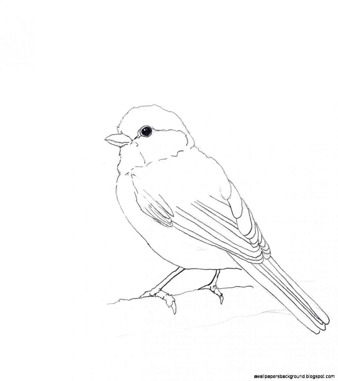 1130x1272 Bird Drawing Tumblr Wallpapers Background