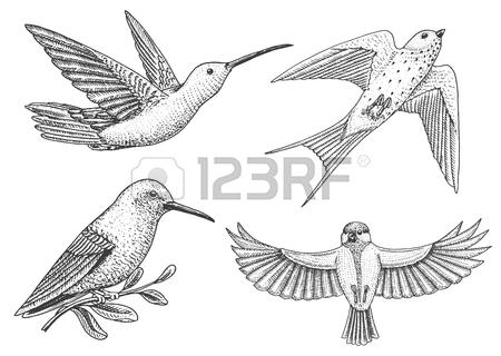 450x320 Sparrow Wallpaper Stock Photos. Royalty Free Sparrow Wallpaper
