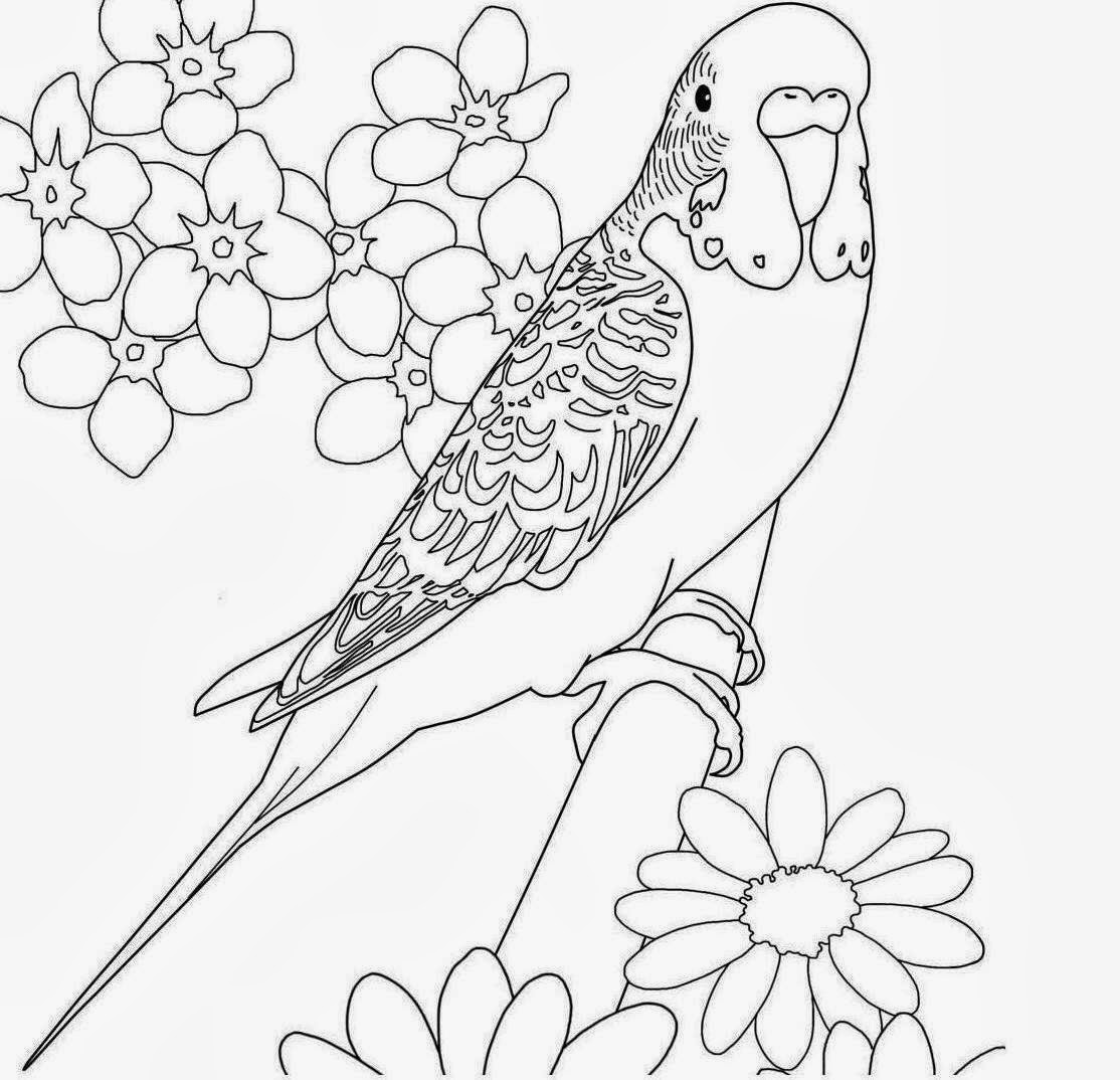 1114x1074 Colours Drawing Wallpaper Beautiful Bird Parrot Coloring Colour