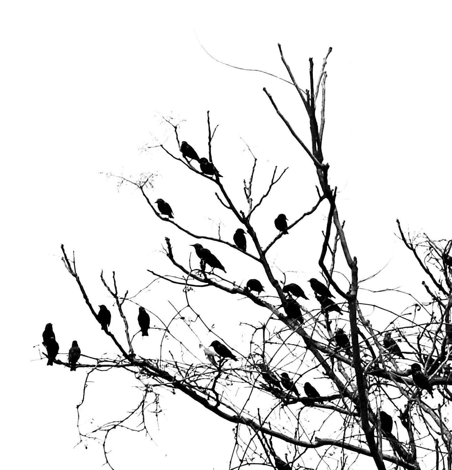 1443x1500 Black And White Bird Hd Wallpaper, Background Image Amazingpict