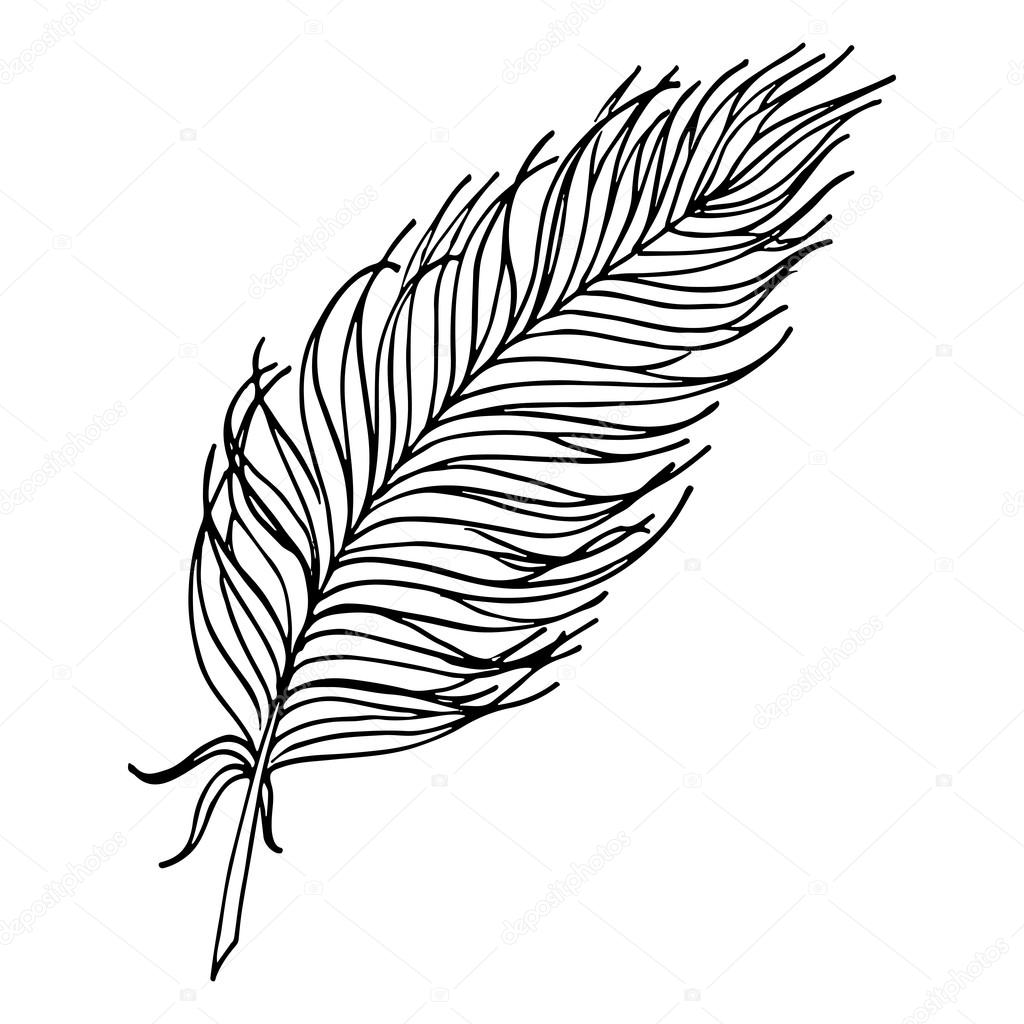 1024x1024 Monochrome Black And White Bird Feather Vector Sketched Art