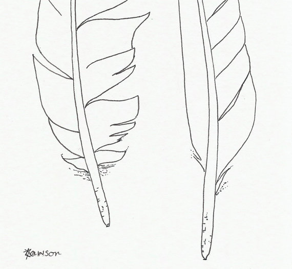 570x526 Original Ink Feather Drawing 2 Sea Bird Feathers