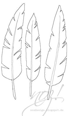236x397 Original Ink Feather Drawing ~ 2 Sea Bird Feathers Feathers