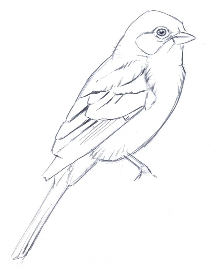736x913 The Best Bird Line Drawing Ideas On Mixed Media