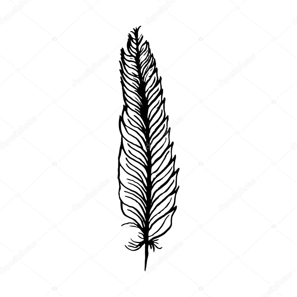 1024x1024 Hand Draw Bird Feather Style Sketch For Registration Cards
