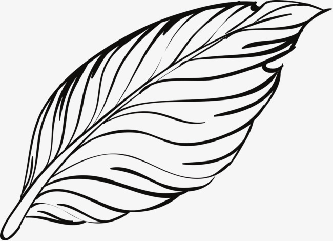 650x470 Bird Feathers, Feather, Bird, Animal Png Image And Clipart