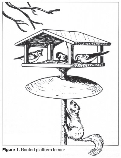 401x524 Aces Publications Feeding Birds Anr 0554