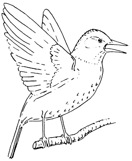 550x668 Starlings