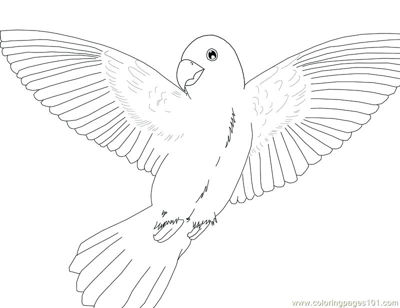 Bird Flight Drawing At Getdrawings Com Free For Personal Use Bird