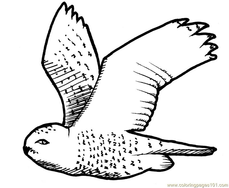 800x659 Flying Owl Coloring Page