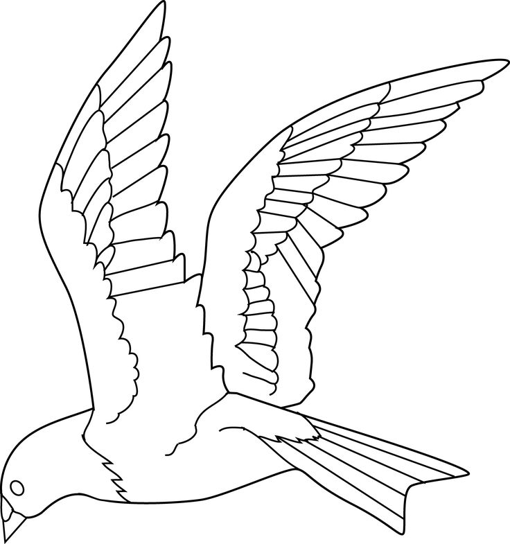 Bird Flying Out Of Cage Drawing at GetDrawings.com | Free for ...