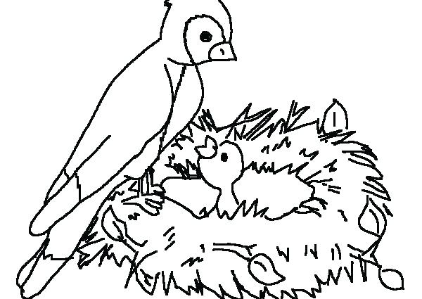 600x425 Coloring Pages Of Birds Coloring Pictures Of Birds Flying Bird