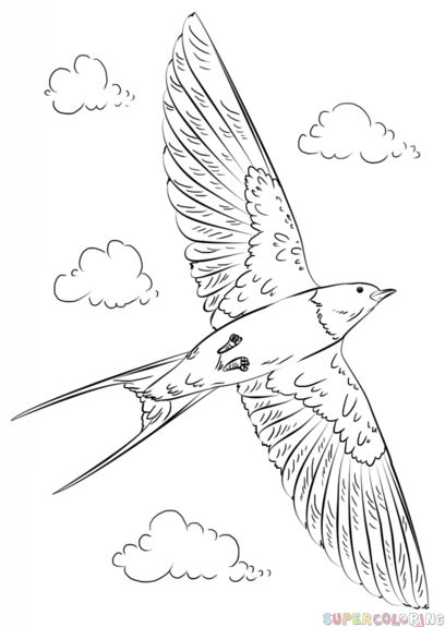 408x575 24 Best Drawing Birds Images On Draw, Draw A Bird
