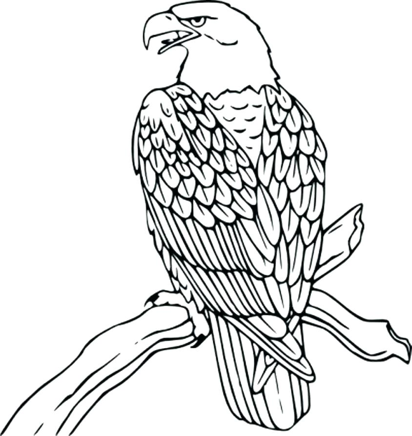 844x893 Coloring Pictures Of Birds Flying Bird Cage Bird Flying From Bird